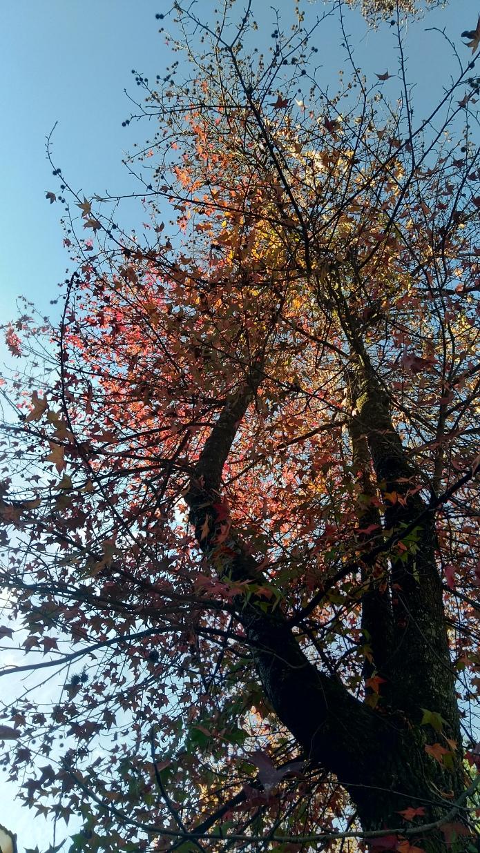 árvore linda